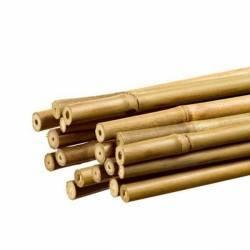 Tutor de Bambú para Plantas