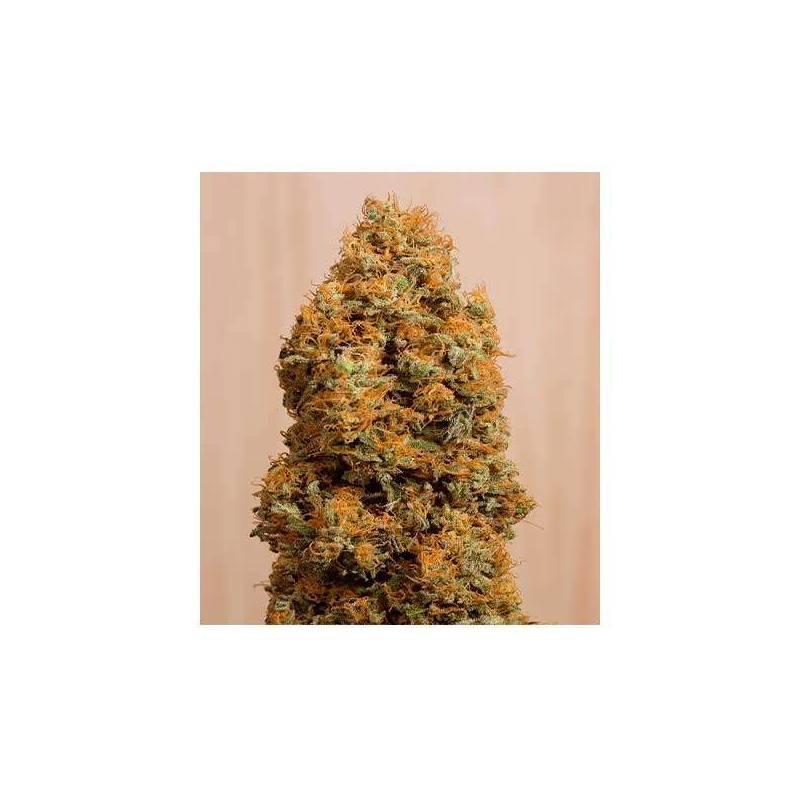 Green Crack CBD Feminziada - 3 uds fem