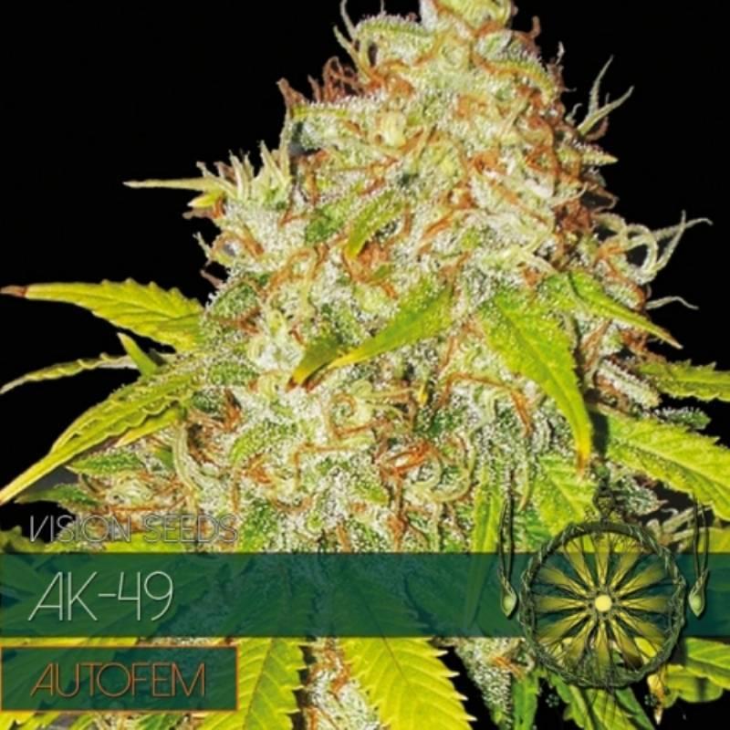 AK-49 Autofloreciente Feminizada - 3 uds auto-fem
