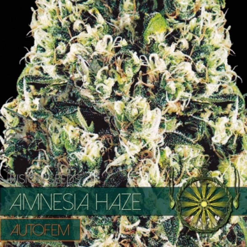 Amnesia Haze Autofloreciente Feminizada - 3 uds auto-fem