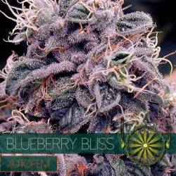 Blueberry Bliss...