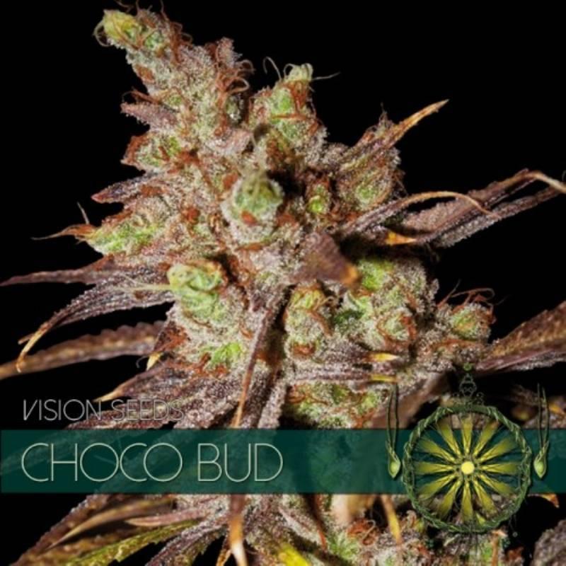 Choco Bud Feminizada - 5 uds fem