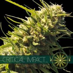 Critical Impact Feminizada