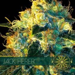 Jack Herer Feminizada