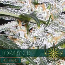 Lowryder Autofloreciente...