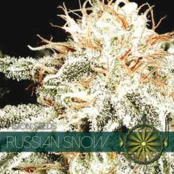 Russian Snow Feminizada