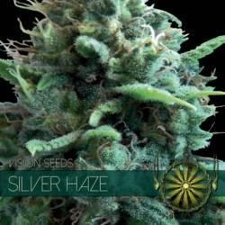 Silver Haze Feminizada