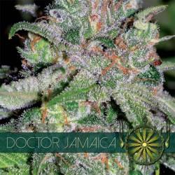 Doctor Jamaica Feminizada