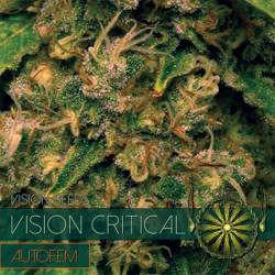 Vision Critical...