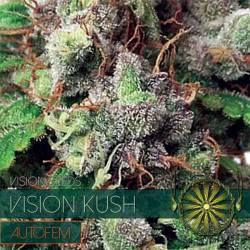 Vision Kush Autofloreciente...