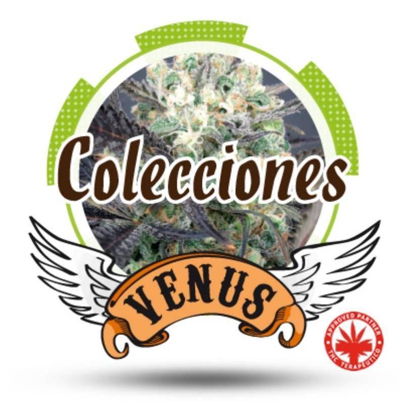 Colección 1 Feminizada - 6 uds fem
