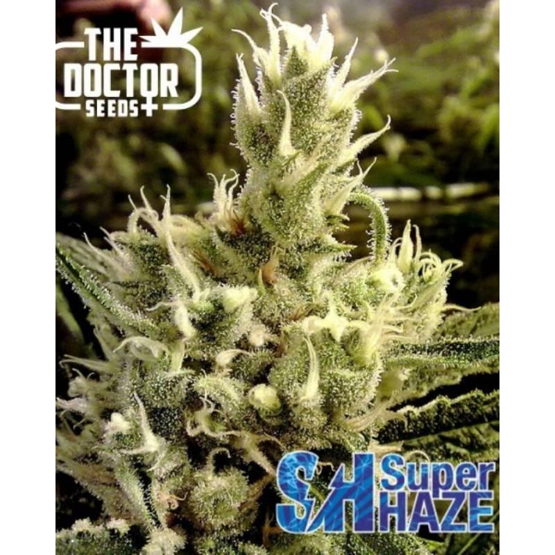 Super Haze Feminizada - 1 ud fem