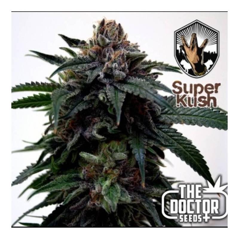 Super Kush Feminizada - 3 uds fem