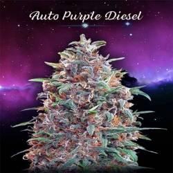 Purple Diesel...