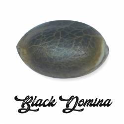 Black Domina Feminizada (a...
