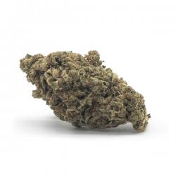 Flor CBD Amnesia CBD - Matillaplant