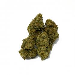 Skywalker OG CBD cogollo de marihuana legal - Matillaplant