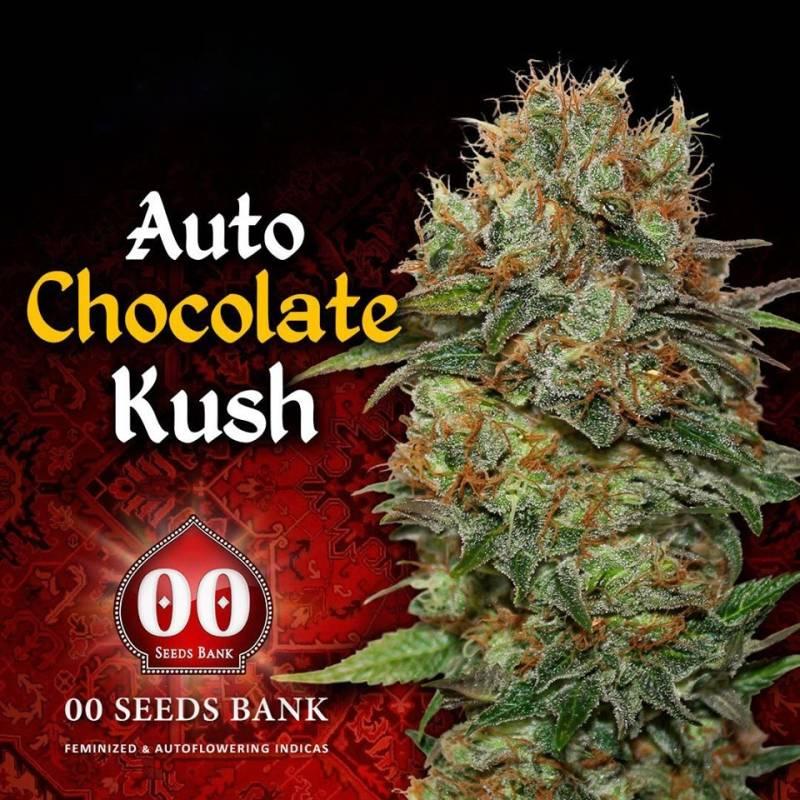 CHOCOLATE KUSH Autofloreciente Feminizada - Imagen 1