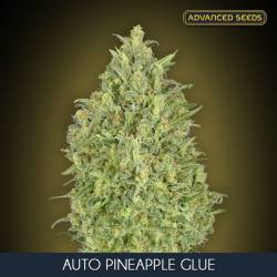 AUTO PINEAPPLE GLUE feminizada