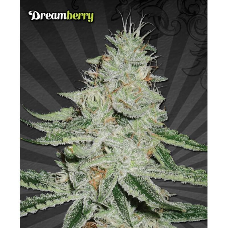 DREAMBERRY - Imagen 1