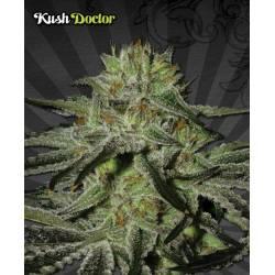 Kush Doctor Autofloreciente...