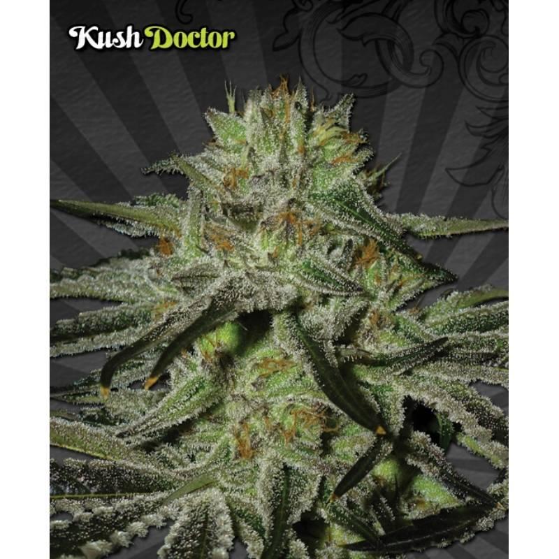 KUSH DOCTOR - Imagen 1