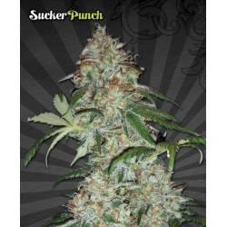 SUCKER PUNCH - Imagen 1