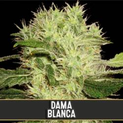 DAMA BLANCA - Imagen 1