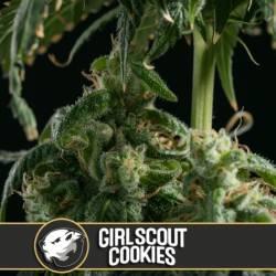 GIRL SCOUT COOKIES - Imagen 1