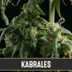 KABRALES - Imagen 1