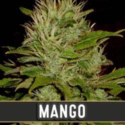 MANGO - Imagen 1
