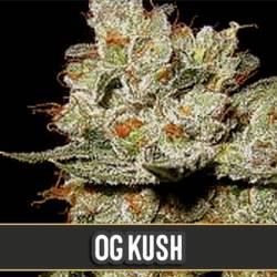 OG'S KUSH - Imagen 1