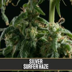 SILVER SURFER HAZE - Imagen 1