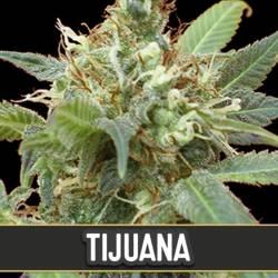 TIJUANA - Imagen 1