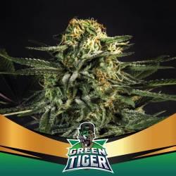 GREEN TIGER FAST VERSION - Imagen 1