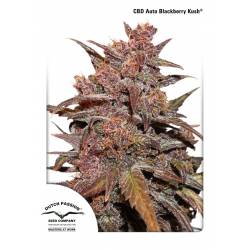 CBD AUTO BLACKBERRY KUSH - Imagen 1