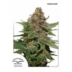 STRAWBERRY COUGH ® - Imagen 1