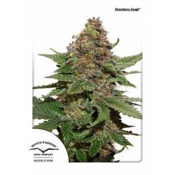 STRAWBERRY COUGH ® - Imagen 1