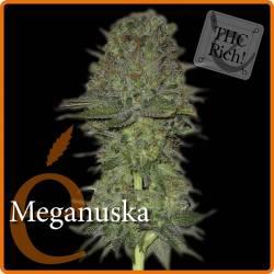 MEGANUSKA - Imagen 1
