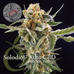 SOLODIOL AUTOFLORECIENTE CBD - Imagen 1
