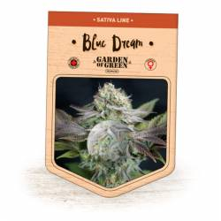 BLUE DREAM - Imagen 1