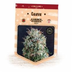 GUAVA - Imagen 1