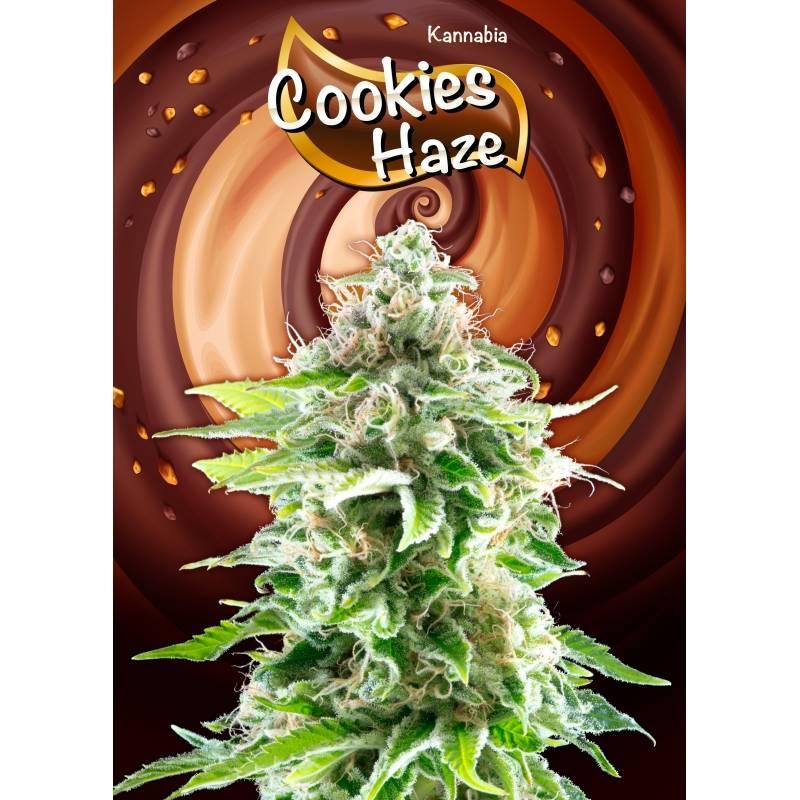 COOKIES HAZE - Imagen 1