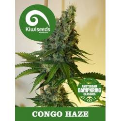 Congo Haze Regular