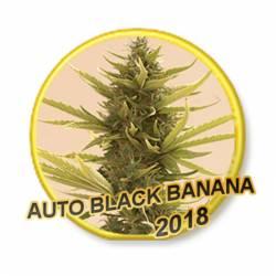 Auto Black Banana