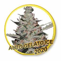 Auto Gelato Ice (Usa Strains)