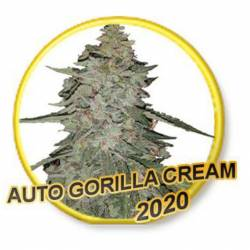Auto Gorilla Cream (Usa...