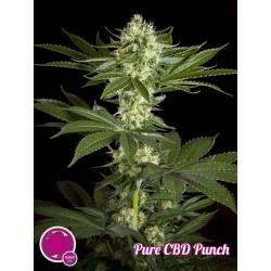 PURE CBD PUNCH - Imagen 1