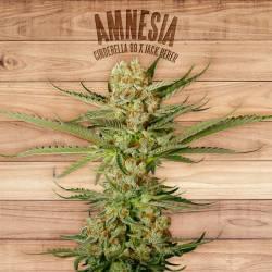 AMNESIA - Imagen 1