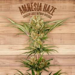 AMNESIA HAZE - Imagen 1